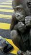 Samsung Galaxy Alpha ha sido el primer teléfono en incluir Gorilla Glass 4