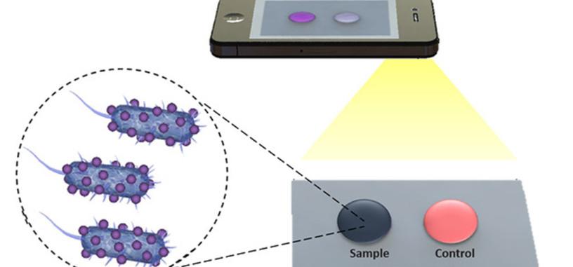 Solo se necesita una película biosensora y un teléfono para diagnosticar virus y bacterias