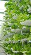 Japón se prepara para las granjas autónomas